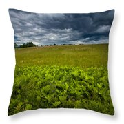 Sunlit Ferns And Purple Vetch Throw Pillow