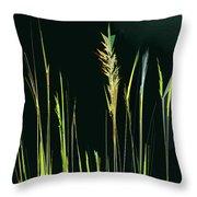 Sunlit Grasses Throw Pillow