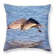 Sunlit Gull Wings Throw Pillow
