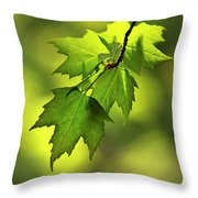 Sunlit Maple Leaves In Spring Throw Pillow