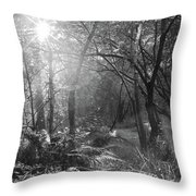 Sunlit Woods, West Dipton Burn Throw Pillow
