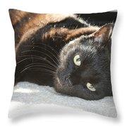 Sunning Black Cat Throw Pillow