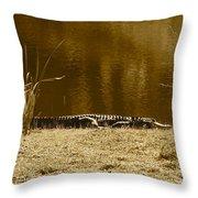 Sunning Gator Throw Pillow