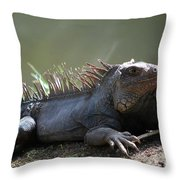Sunning Gray Iguana Sitting Beside Water Throw Pillow