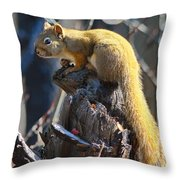 Sunning Squirrel Throw Pillow
