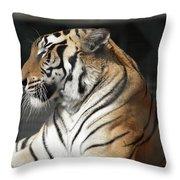 Sunning Tiger Throw Pillow