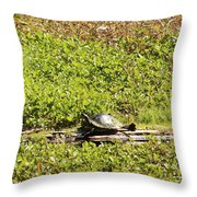 Sunning Turtle In Swamp Throw Pillow