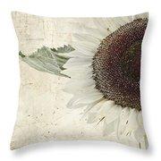 Sunny Albino Sunflower Throw Pillow
