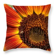 Sunny And Bright Today.  Throw Pillow