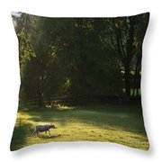 Sunny Evening Throw Pillow