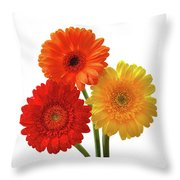 Sunny Gerbera On White Throw Pillow