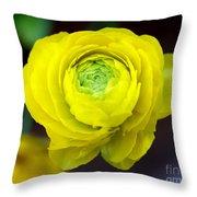 Sunny Ranunculus Throw Pillow