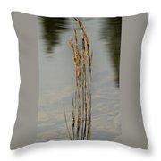 Sunny Reeds Reflect Throw Pillow