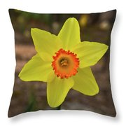 Sunrise Daffodil Throw Pillow