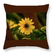 Sunrise Daisy Delray Beach Florida Throw Pillow