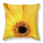 Sunrise Gerbera Throw Pillow