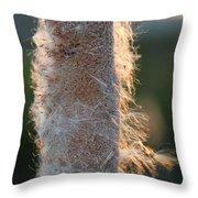 Sunset Cat Tail Lathrop California Throw Pillow