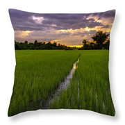 Sunset Rice Fields In Cambodia Throw Pillow