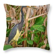 Sunset Search Throw Pillow