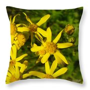 Sunshine Along The Trail Throw Pillow