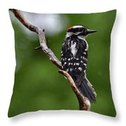 Sunshine Needed - Male Downy Woodpecker Throw Pillow