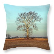 Sunshine Sycamore Throw Pillow