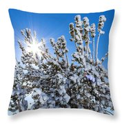 Sunshine Through Snow Covered Tree Throw Pillow