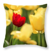 Sunsoaked Tulips #5 Throw Pillow