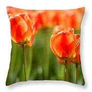 Sunsoaked Tulips #6 Throw Pillow