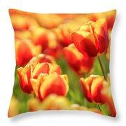 Sunsoaked Tulips #7 Throw Pillow