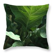 Super-fly Cabbage Throw Pillow