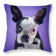 Super Pets Series 1 - Bugsy Close Up Throw Pillow