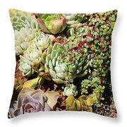 Super Succulents Throw Pillow