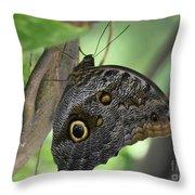 Superb Markings On An Owl Butterfly In A Garden Throw Pillow