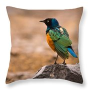 Superb Starling Throw Pillow by Adam Romanowicz