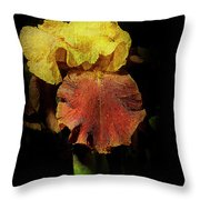 Supreme Sultan Iris  Throw Pillow