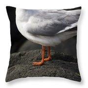 Suprised Australian Seagull Throw Pillow