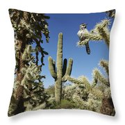 Surrounded Saguaro Cactus Wren Throw Pillow