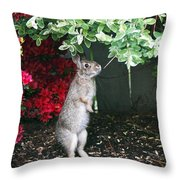 Surveying Next Leafy Meal Throw Pillow
