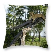 Surveying The Plains Throw Pillow