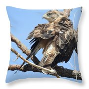 Swainson Hawk Throw Pillow