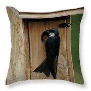 Swallow Feeding Young Throw Pillow by Ben Upham III