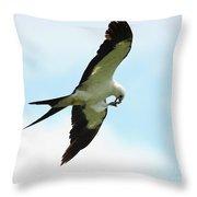 Swallow-tailed Kite Eating Throw Pillow