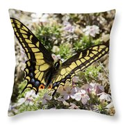 Swallowtail At Sand Wash Throw Pillow