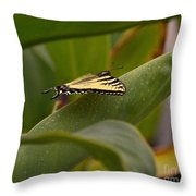 Swallowtail Butterfly Throw Pillow