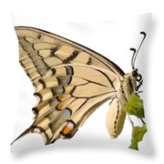 Swallowtail Butterfly Vector Isolated Throw Pillow