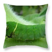 Swallowtail Caterpillar Throw Pillow