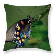Swallowtail Throw Pillow