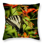 Swallowtail Hanging On The Crocosmia Throw Pillow