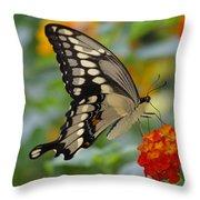 Swallowtail On A Lantana Throw Pillow